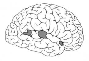 kortikale motorische areale
